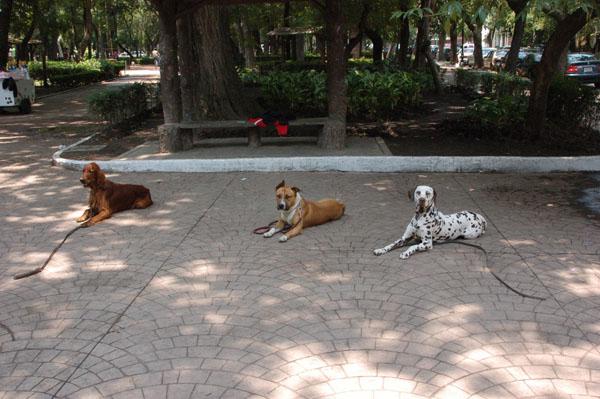 chiens1.jpg