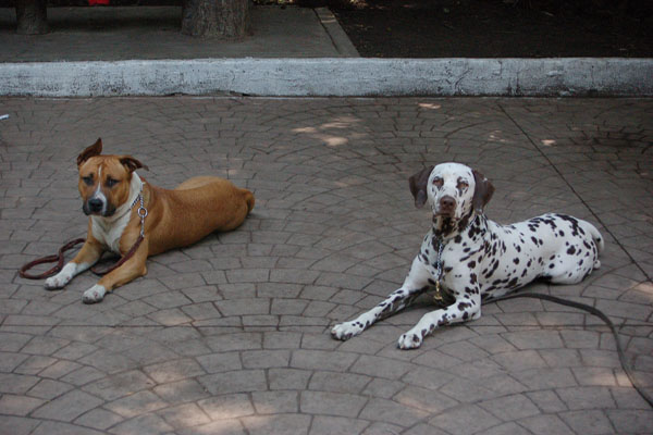 chiens2.jpg